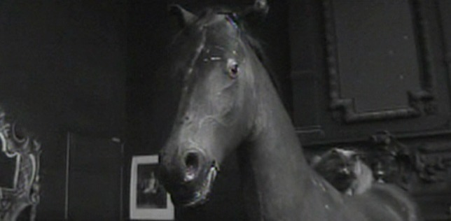 The 400 Blows - long-haired grey cat sitting on horse