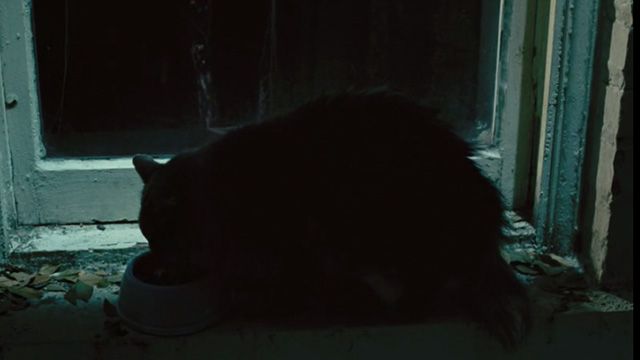 88 Minutes - long-haired gray cat eating dry food from bowl in windowsill