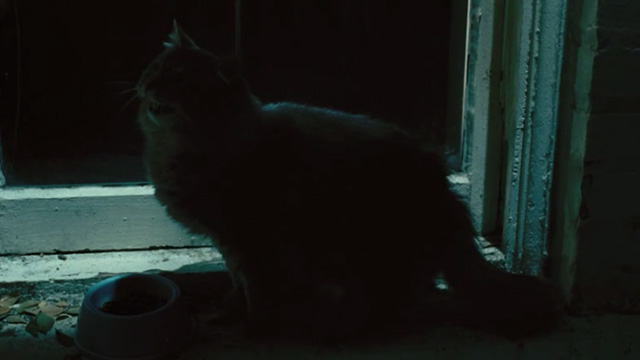88 Minutes - long-haired gray cat meowing on windowsill