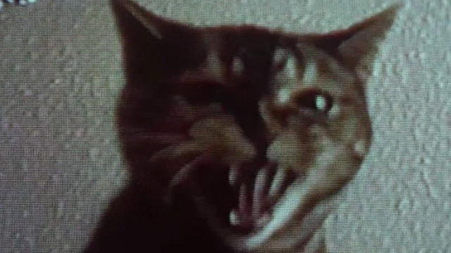 8MM - close up of tabby cat hissing