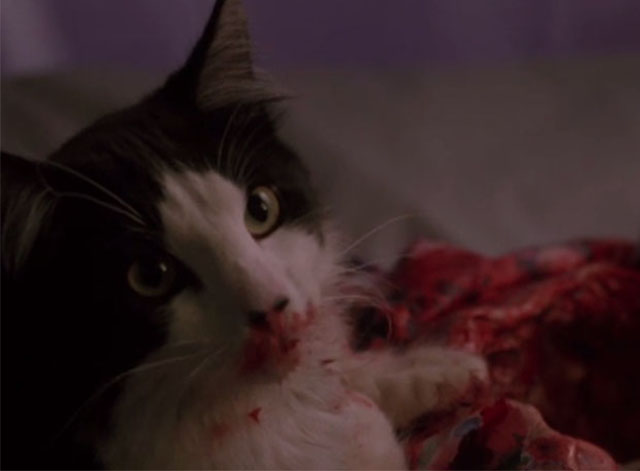 976-EVIL - tuxedo cat with bloody mouth