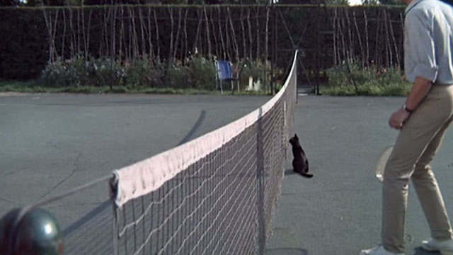 Accident - black cat in middle of tennis court