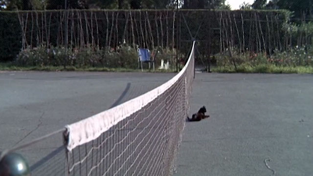 Accident - black cat lying in middle of tennis court