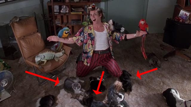 Ace Ventura: Pet Detective - Ace Jim Carrey surrounded by animals in his apartment