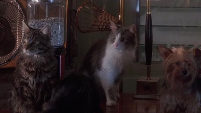 Ace Ventura: Pet Detective - two cats watching Ace and Melissa make love