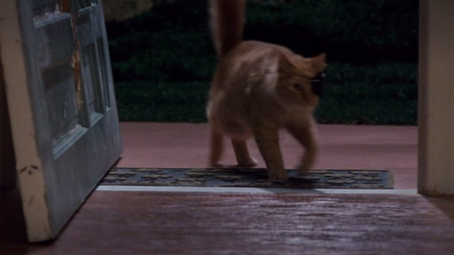 Ace Ventura: Pet Detective Jr. - long-haired orange cat with one eye and patch enters through front door