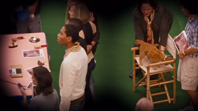 Ace Ventura: Pet Detective Jr. - ginger tabby cat Tabby being placed on chair by trainer Karel Wright