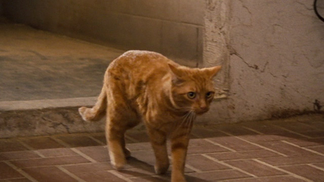 Ace Ventura: Pet Detective Jr. - ginger tabby cat Tabby coming out of barn
