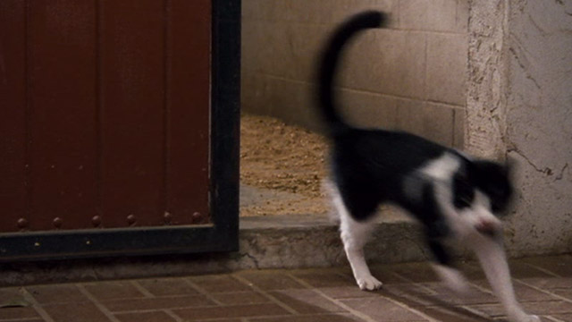 Ace Ventura: Pet Detective Jr. - tuxedo cat coming out of barn