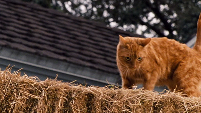 Ace Ventura: Pet Detective Jr. - ginger tabby cat Tabby on top of hay bails
