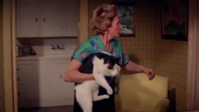 Ada - Alice Sweet Connie Sawyer still holding fat tuxedo cat