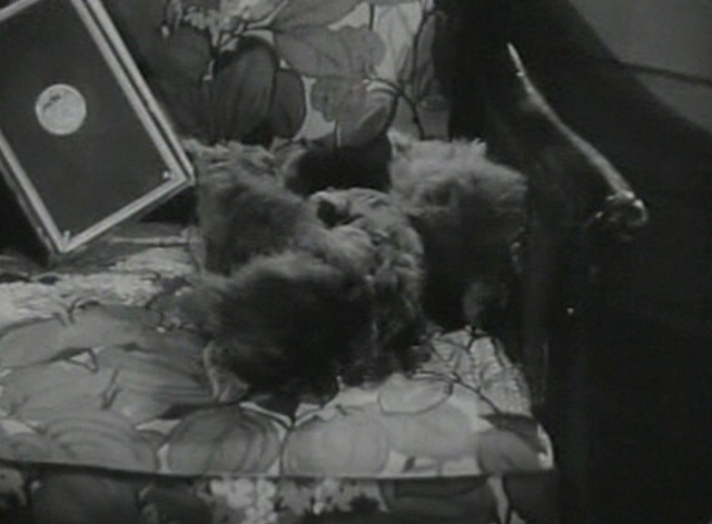 The Adventures of Mark Twain - kittens on chair