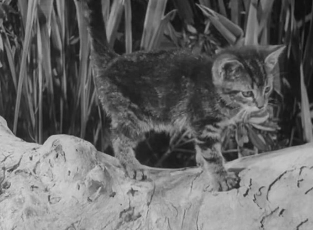 Africa Screams - tiny tabby kitten getting off log