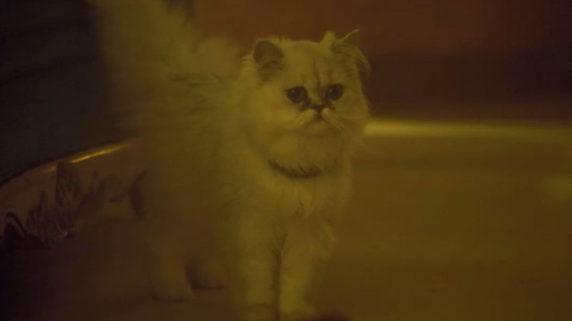 Agatha Christie's The Witness for the Prosecution - white Persian cat Mimi standing