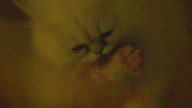 Agatha Christie's The Witness for the Prosecution - white Persian cat Mimi licking blood off paws