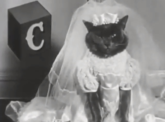 Alphabet Antics - grey cat dressed as bride with letter C