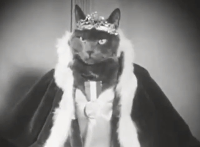 Alphabet Antics - grey cat dressed as queen