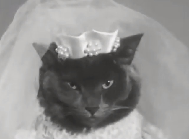 Alphabet Antics - closer shot of grey cat dressed as bride