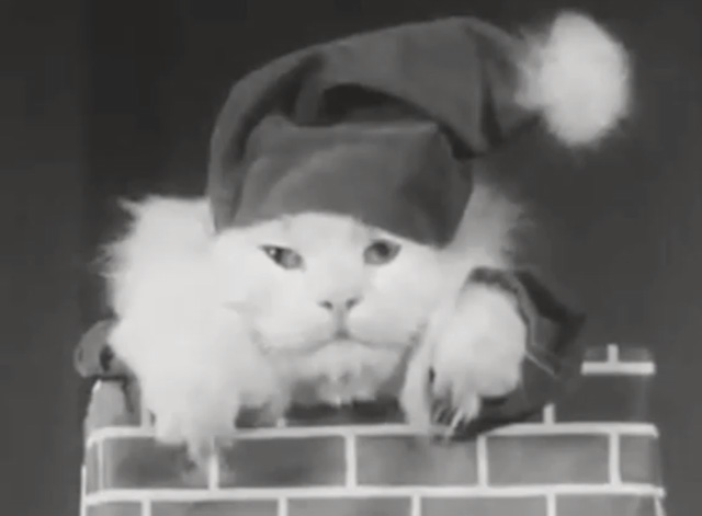 Alphabet Antics - white Angora cat dressed as Santa Claus