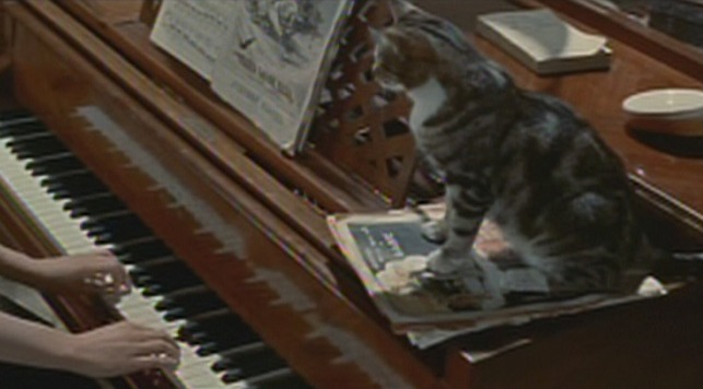 Anastasia cat on piano