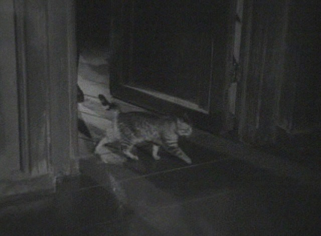And Then There Were None - tabby cat walking through doorway