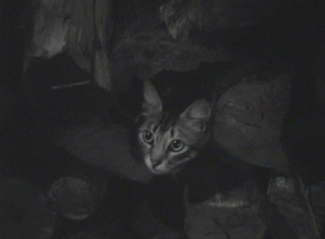 And Then There Were None - tabby cat looking up from woodpile
