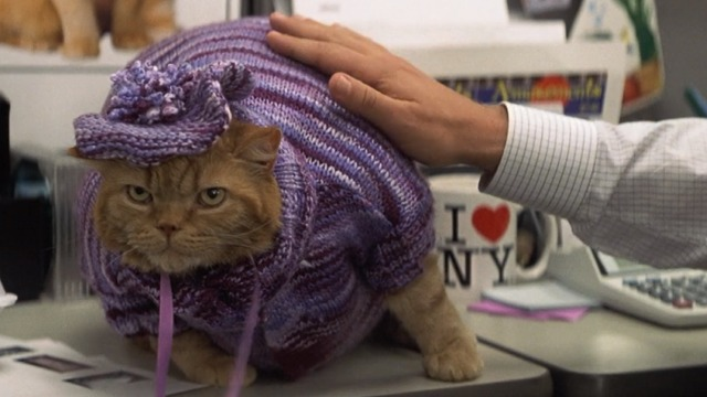 Anger Management - Meatball orange tabby in purple outfit with beret