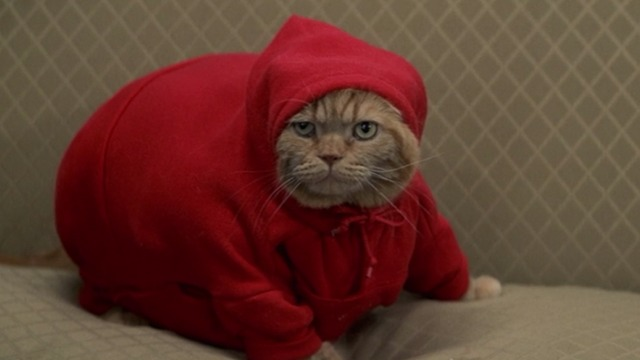 Anger Management - Meatball orange tabby on couch in red hoodie
