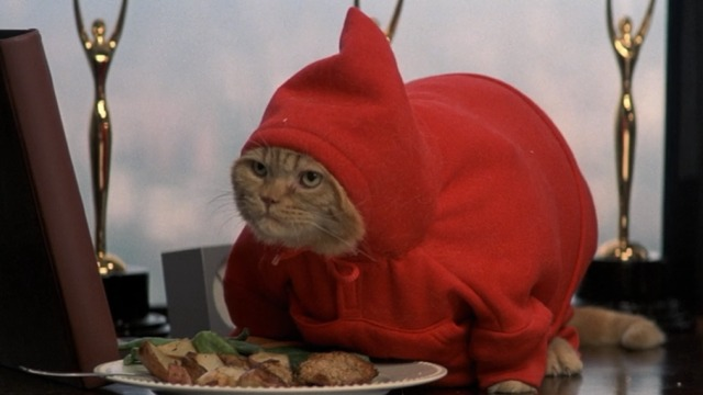 Anger Management - Meatball orange tabby in red hoodie eating crabcakes
