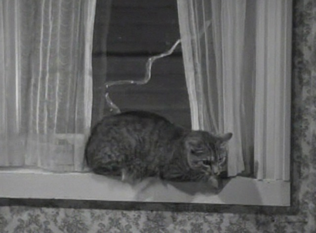 Another Thin Man - tabby cat sitting in windowsill