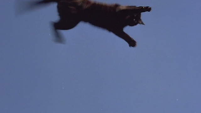 Another You - black cat flying through air
