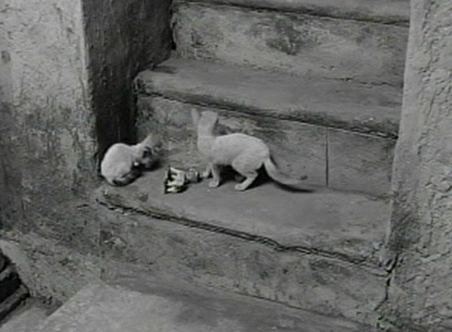 Aparajito - two white kittens on stairs
