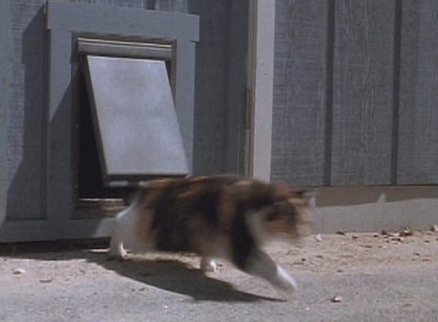 Arachnophobia - calico cat running out of pet door