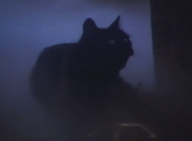 Arnold - black cat in graveyard