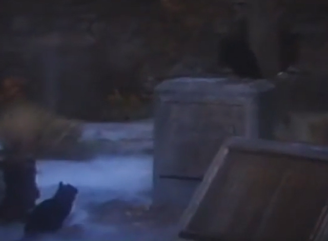 Arnold - black cat looking up at raven in graveyard