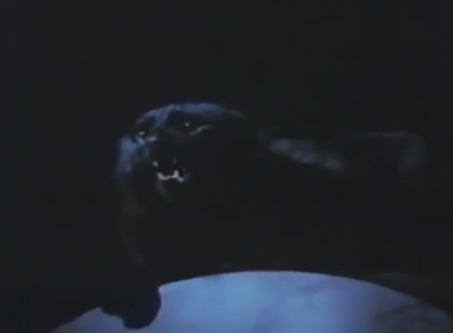 Arnold - black cat hissing on casket