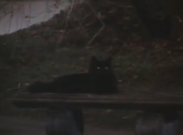 Arnold - black cat on bench in graveyard