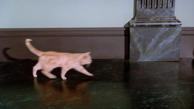 Around the World in 80 Days - orange tabby cat walking past