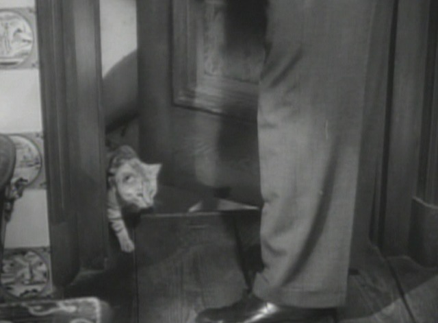 Arsenic and Old Lace cat