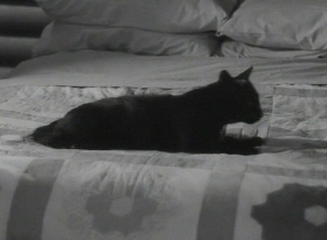 The Awful Truth cat