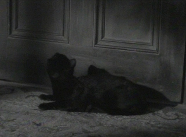 The Awful Truth cat door