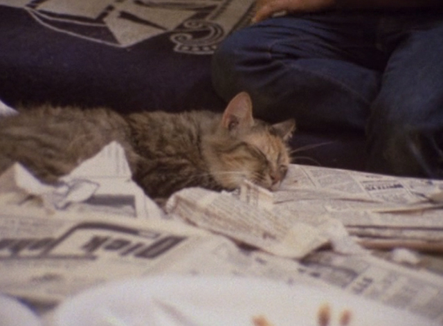 The Beales of Grey Gardens - tabby cat Pippy sleeping on bed