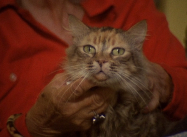 The Beales of Grey Gardens - close up of tabby cat Pippy
