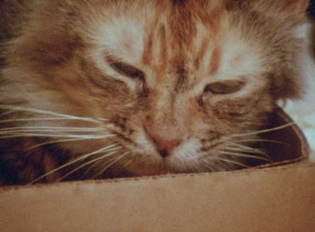 The Beales of Grey Gardens - exteme close up of tabby cat Pippy sleeping in box
