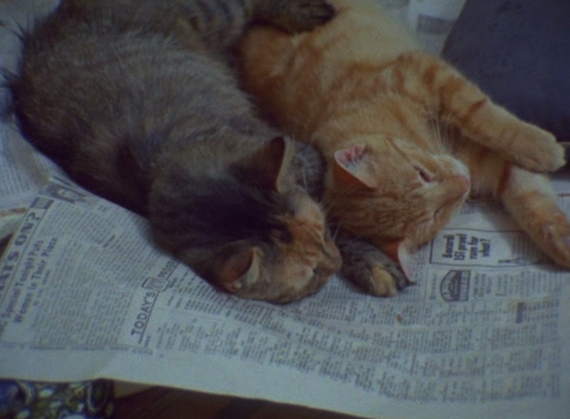 The Beales of Grey Gardens - two cats sleeping on newspaper