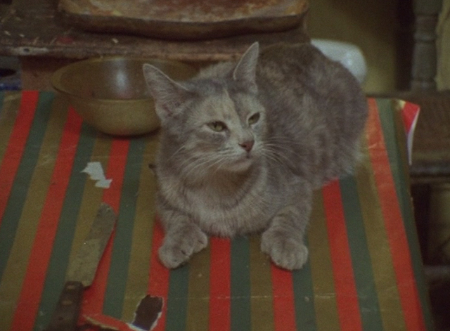The Beales of Grey Gardens - small tabby cat on table