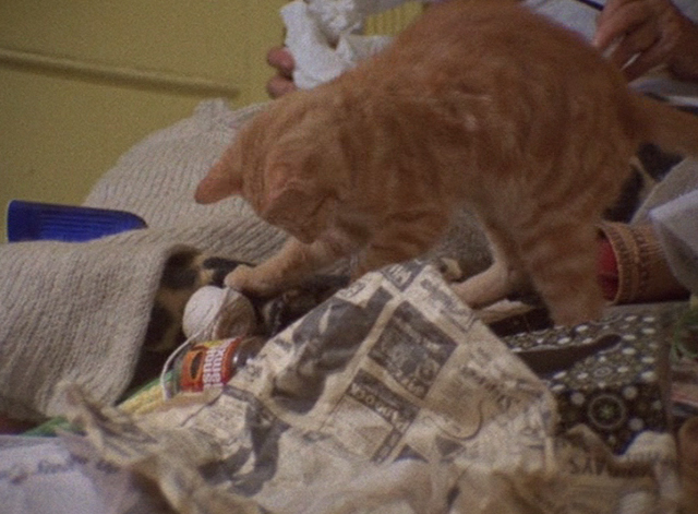 The Beales of Grey Gardens - tabby cat playing with string on bed