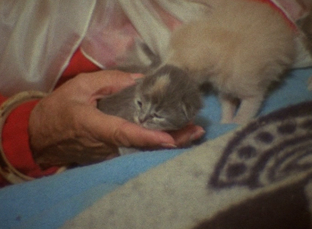 The Beales of Grey Gardens - tiny grey kitten on bed