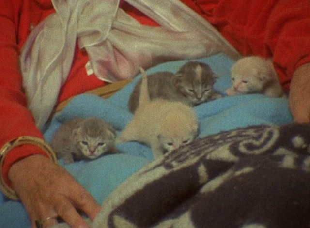 The Beales of Grey Gardens - tiny kittens on bed