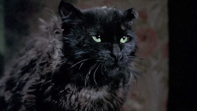 Bedknobs and Broomsticks - ragged black cat Cosmic Creepers close